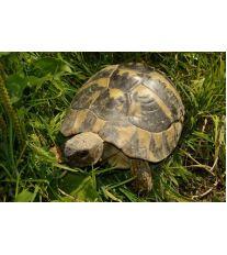 Venkovní výběh pro suchozemské želvy