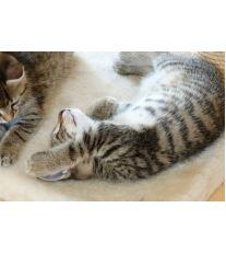Česanie mačiek - ako na to?