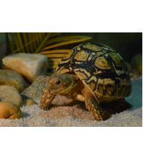 Chov suchozemské želvy - Základní otázky před pořízením