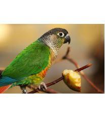 Zvýšenie imunity papagája