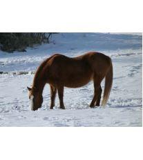 Starostlivosť o koňa v zime