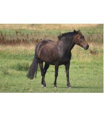 Co vše potřebuje kůň