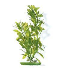 Rastlina MARINA Hygrophila 30 cm