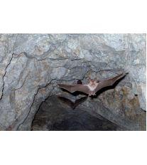Zaujímavosti o netopieroch