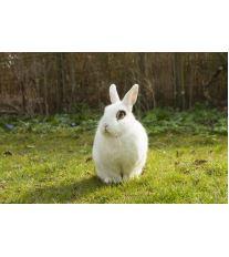 Máte doma králíka? Možná jste si pořídili zajíce vpytli!