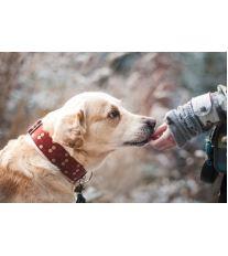 Nevhodné správanie psa: Ako ho odnaučiť zlozvykom?