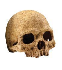 Dekorácie EXO TERRA ľudská lebka