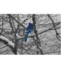 Ako sa starať o vtáctvo v zimnom období?