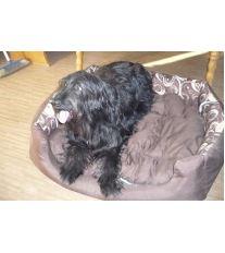 Pelech pro psa Argi obdélníkový s polštářem - hnědý se vzorem