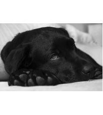 5 nejčastějších psích nemocí