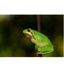 Chov žab - Mýty - 2. část