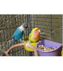 Ako si vybrať papagája?