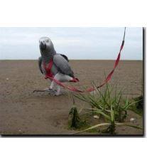Kšandy s vodítkem pro papoušky Terra vel. M